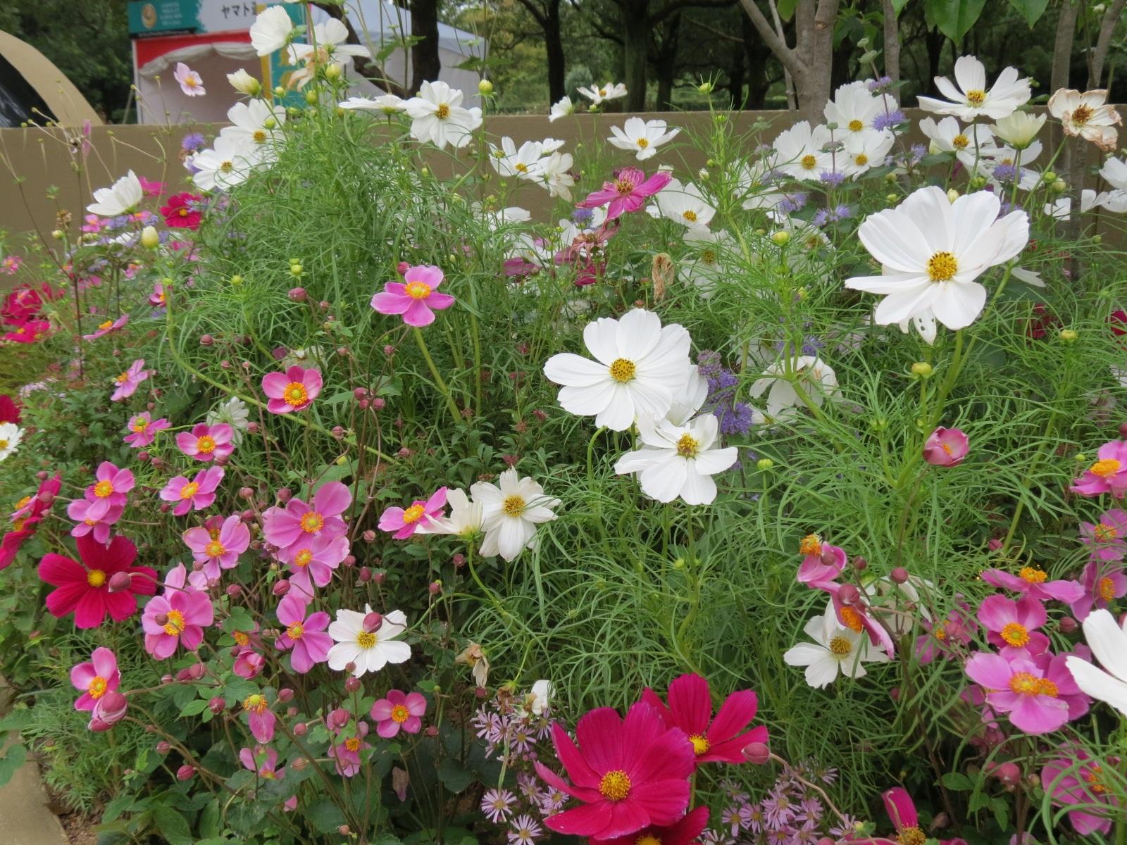 Japan Garden Flowers: The Constant Gardener: Postcard From Japan: The Home Team