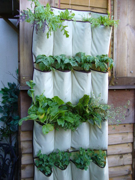Αποτέλεσμα εικόνας για παπουτσοθηκη καθετη κηπουρικη