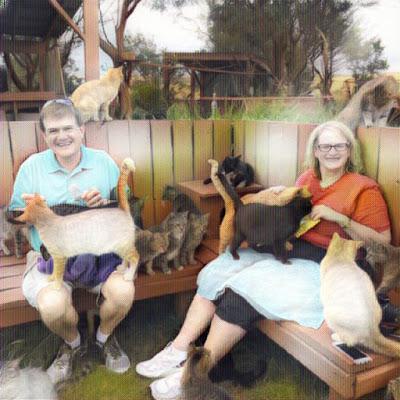 Pareja acariciando gatos en el Santuario Lanai