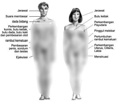 perubahan fisik laki-laki dan perempuan