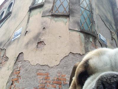 perro selfie