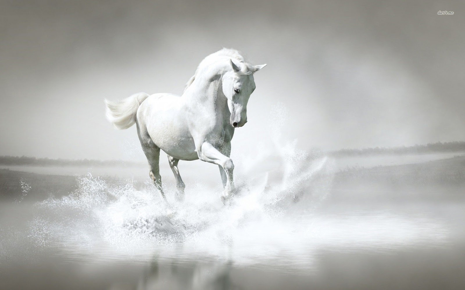 Hd Wallpaper White Horse Hd Wallpaper