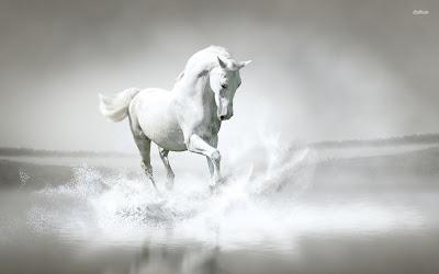 Hd Wallpaper White Horse Hd Wallpaper