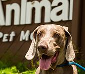 Pet Travel News Air Animal 174 Pet Movers