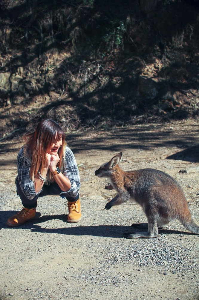 Jenolan Caves NSW Wallaby Australia