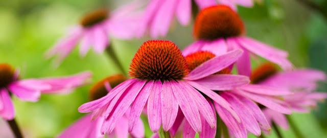 Floracion y biologia