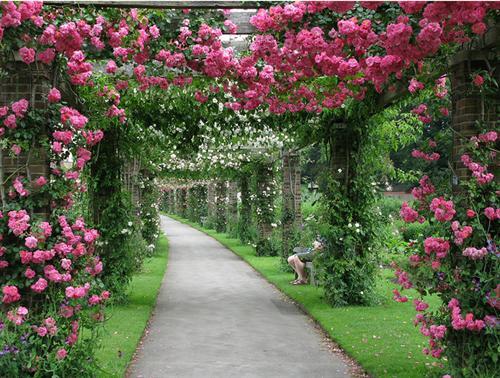 Tạo lối đi lãng mạn với hàng rào hoa độc đáo