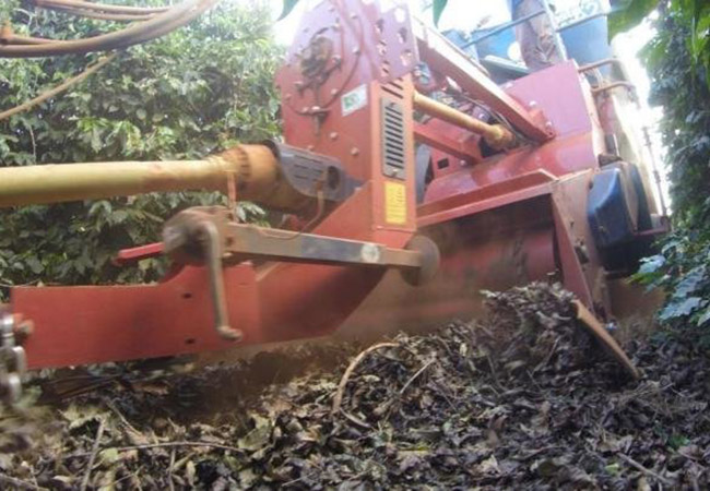 Penelitian Effect of Soil Management Practices on the Sweeping Operation during Coffee Harvest