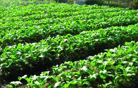 Belajar Pertanian Organik PDF