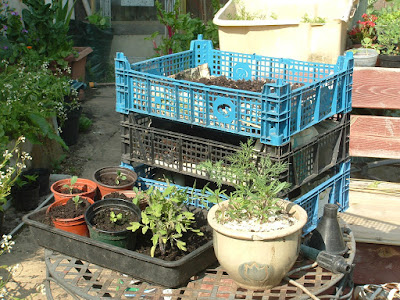 A stack of three plastic trays and several small potted plants on a patio table