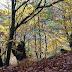 Ordenar a política forestal galega durante os vindeiros 20 anos