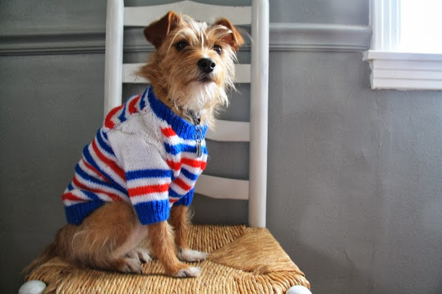 Bella Bella Vita Dog Lovin Diy Dog Sweaters