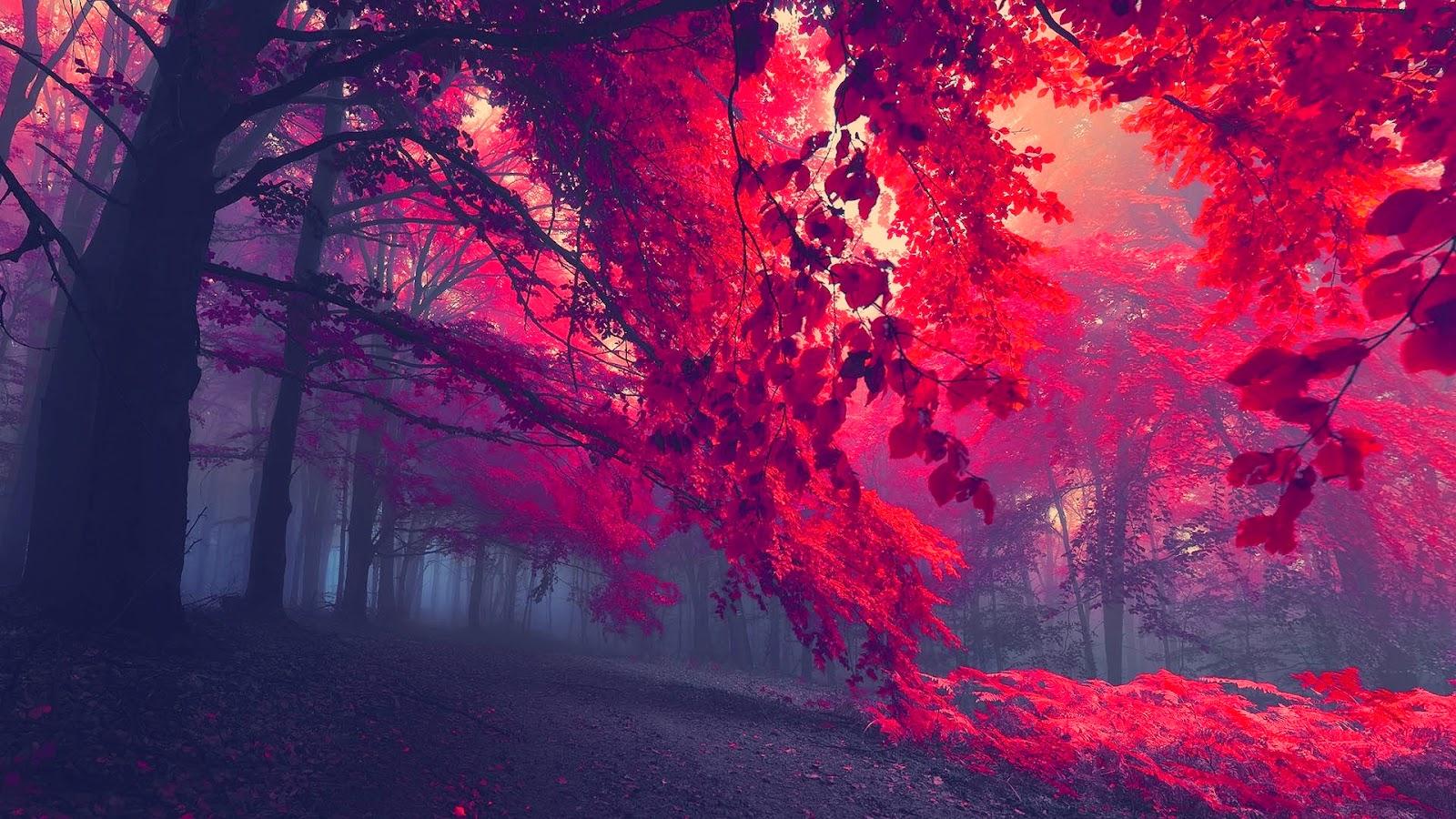 Paarse bomen in het bos