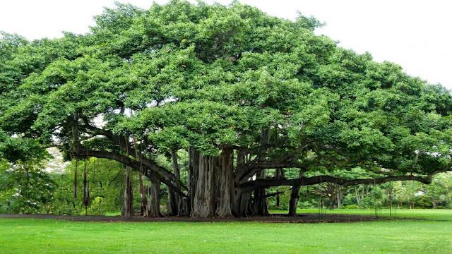 वृक्षों  से  हैं जीवन | Hindi Article | Neera Jain