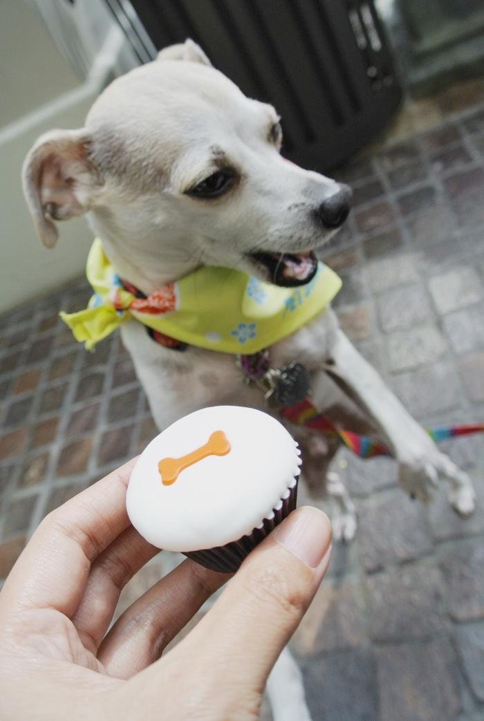 Sprinkles Doggie Cupcake