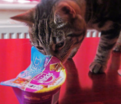 cat eating whiskas