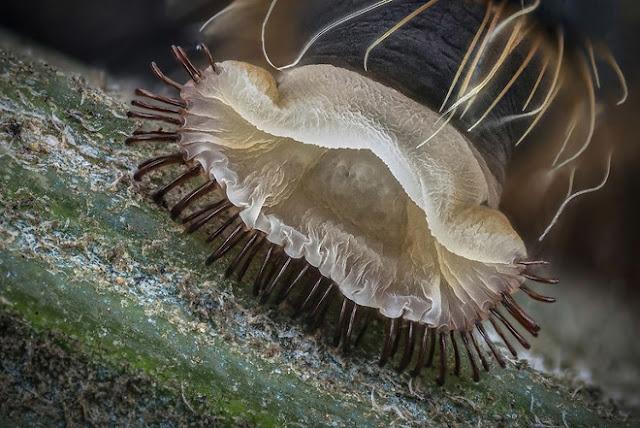 Phần bụng của một con sâu bướm, tác phẩm đến từ Netaniya, đạt giải Khuyến khích