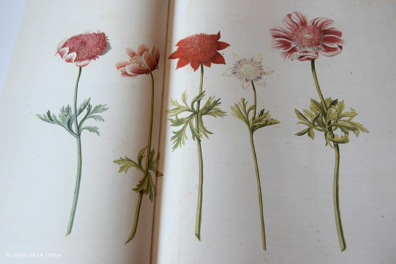 """Five Studies of Anemones"" 1760-1770. Garden Flora. Noel Kingsbury"