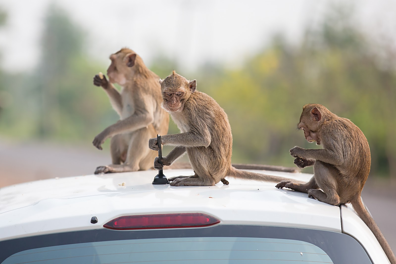 makaki,auto,Tajlandia