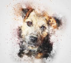 Animal abuse: are we Human?