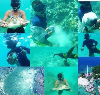 Menyelam di Pantai Tanjung Kelayang