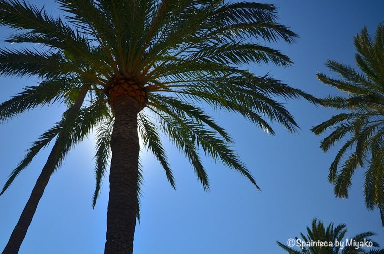 Dénia Spain 地中海の町デニアの背の高いヤシの木