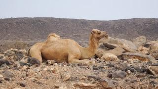 Ugly animal sits and waits for tourist to take photo