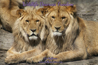 The wild deserve to live in the natural habitat and freedom