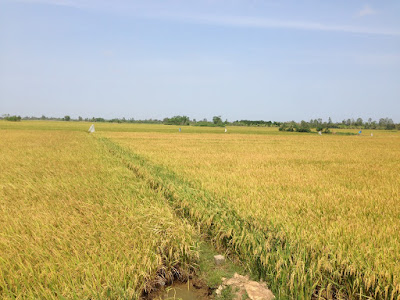 mekong-delta-tour-2day-pic04