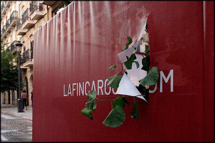 Fotografía de unas hojas de un árbol saliendo de un cartel roto en una calle de Valencia