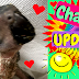 Charlie UPDATE—Baby Timneh African Grey—Coming Home Date Announcement & Videos Included!