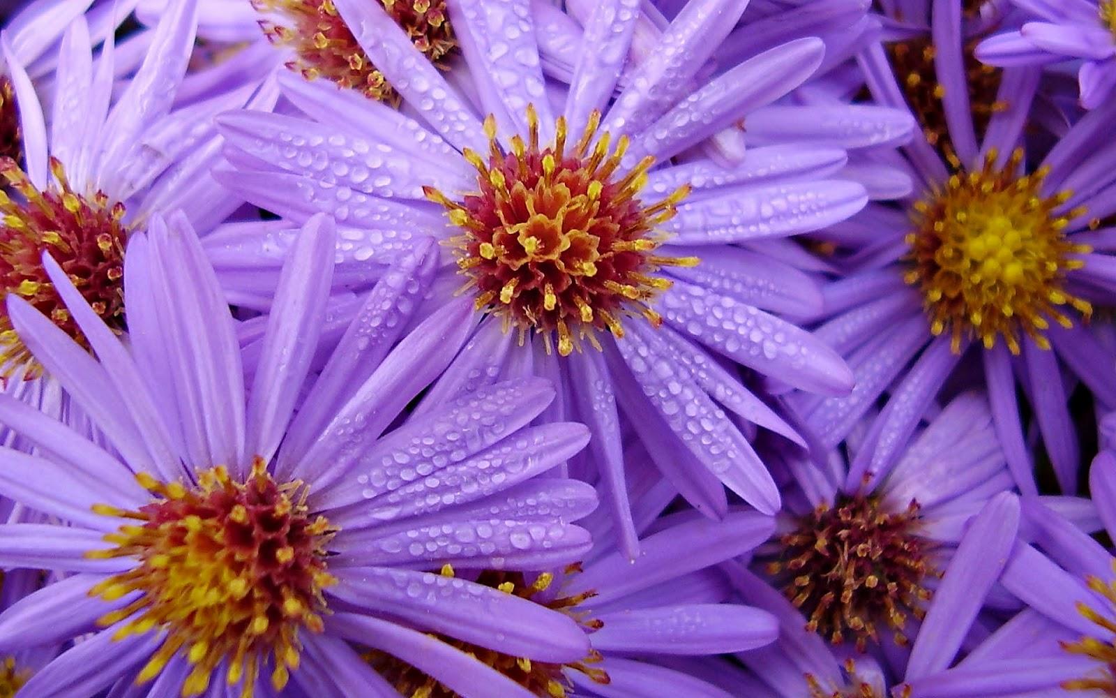 Achtergrond met paarse bloemen  Mooie Leuke Achtergronden
