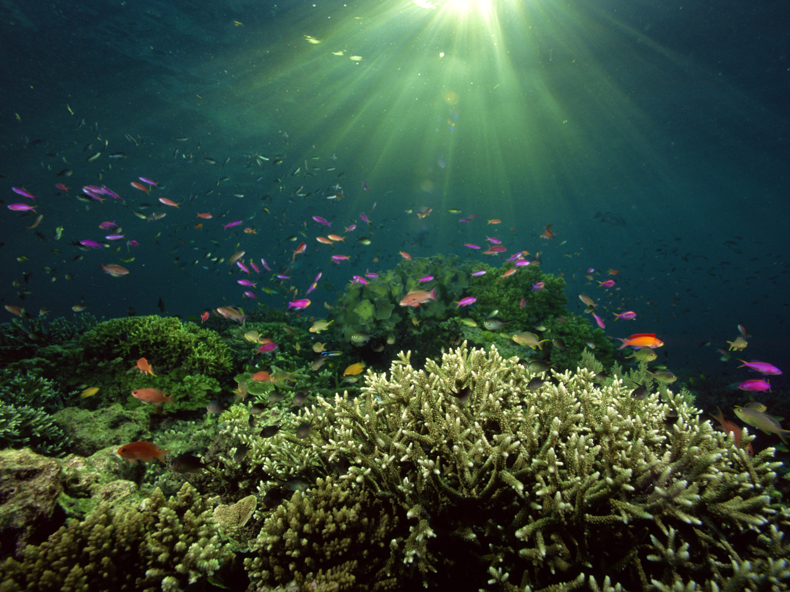 Underwater Sea Fishes HD wallpapers | npicx | we share