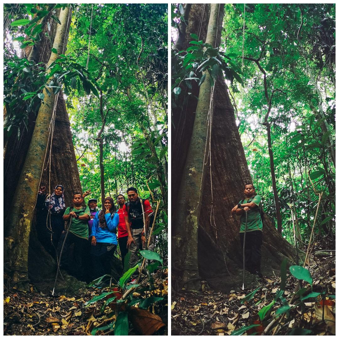 Kota Damansara Community Forest (KDCF) - Pokok