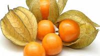 gambar buah ceplukan
