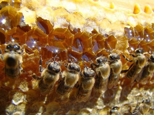 Πωλείται μέλι