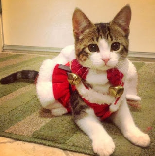 Santa kitty cat adorable cute