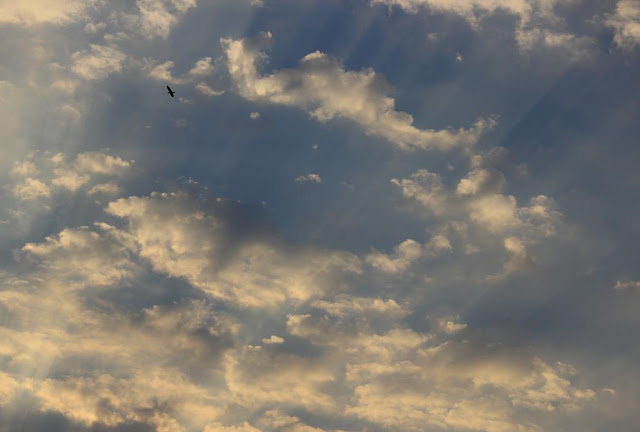 evening sky, clouds, bandra east, mumbai, india, rays, bird, skywatch,