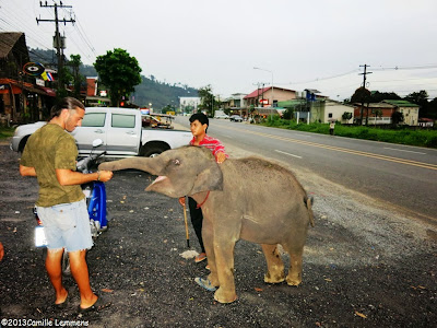 Young elephant in Khao Lak streets