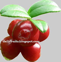 lingonberry, fruits and health, dailyfruits.blogspot.com