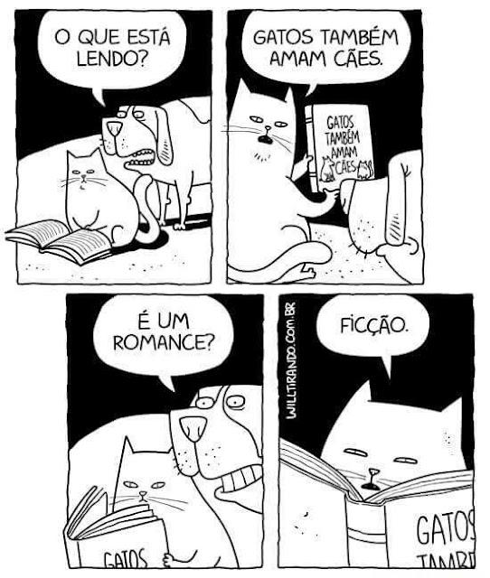 Gatos também amam cães