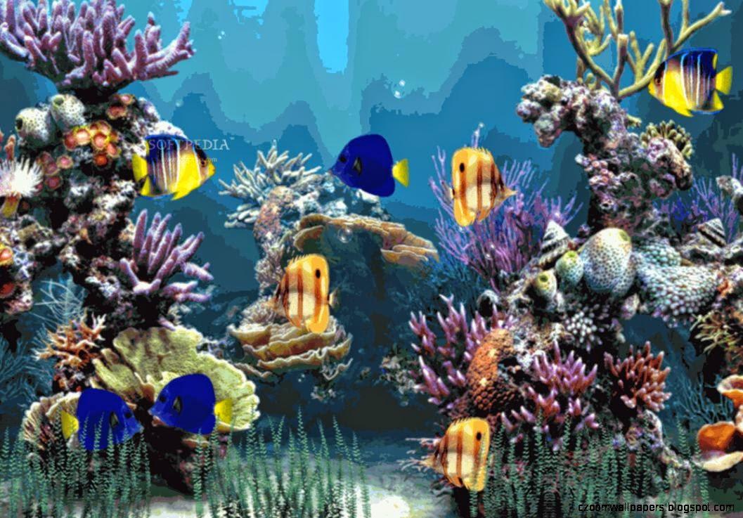 best zoom aquarium backgrounds