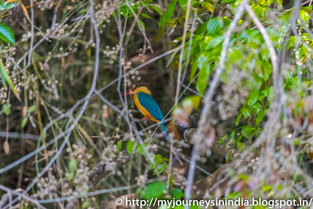Ranganathittu Birds King Fisher