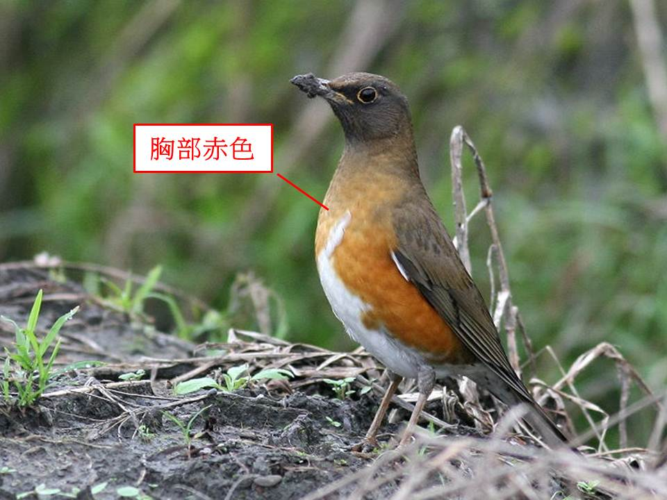 臺大自然保育社: [鳥社課] 臺大校園鳥類