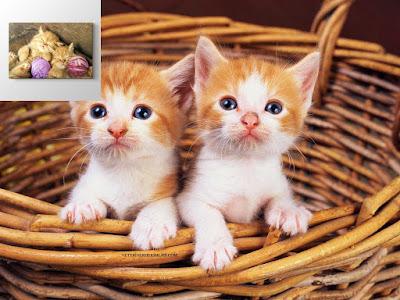 kedi-annelik