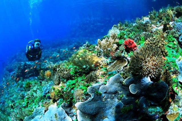 terumbu karang bunaken