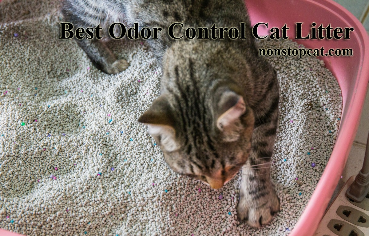 Best Odor Control Cat Litter