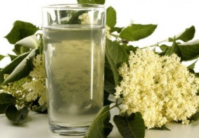 How to make elder plant juice