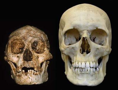 Bikin Heboh, Menguak Fakta dari Penemuan Tengkorak Manusia Tertua di Dunia