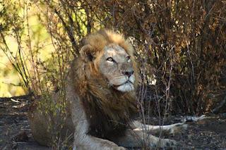 http://vikisbookblog.blogspot.de/2017/08/reisen-sud-afrika-kruger-national-park.html